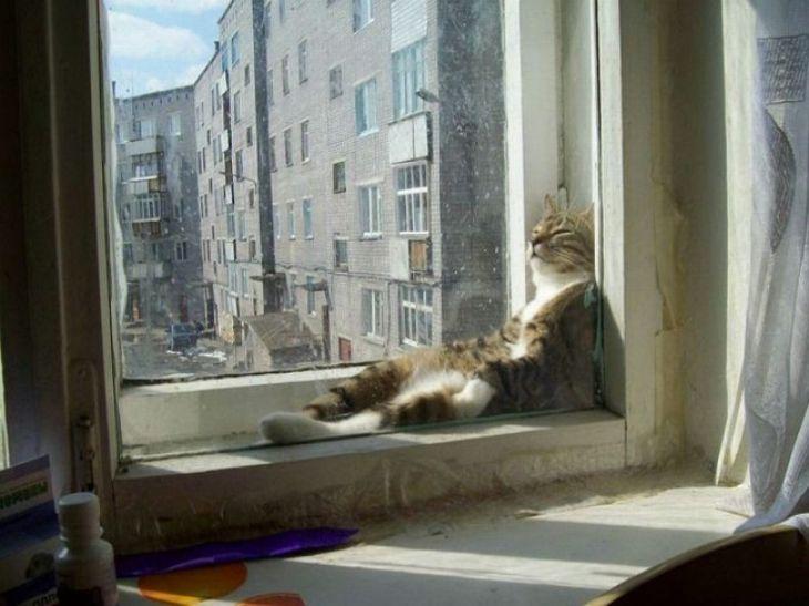 20 unfassbar faule Katzen, die das Maximum an Entspannung erreicht haben