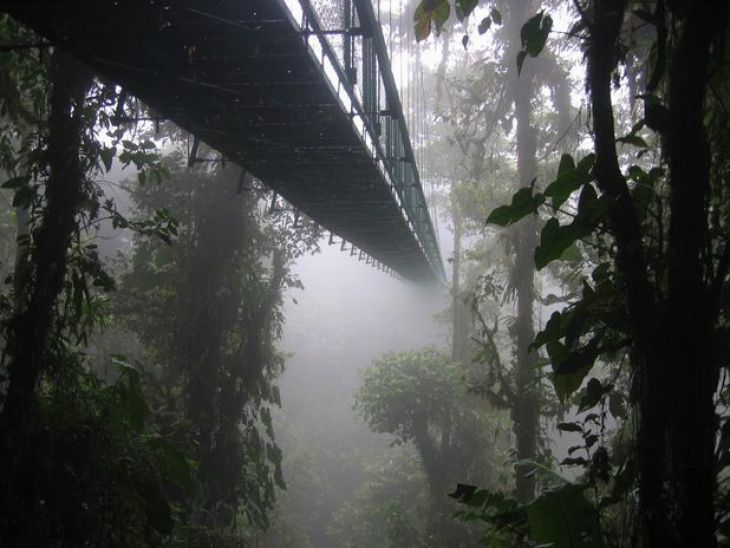 Rainforest Bridge (Costa Rica)