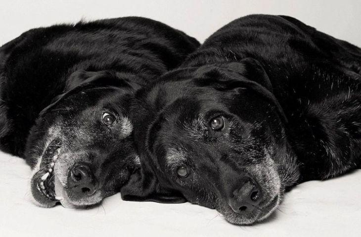 Wie Hunde altern: Ein faszinierendes und berührendes Foto-Projekt