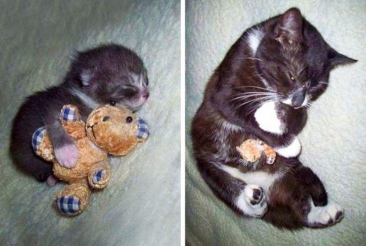 16 huisdieren die verliefd zijn geworden op een speeltje en er voor geen goud van willen scheiden