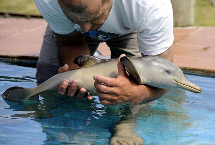 Hombre que sostiene un Bebé delfín