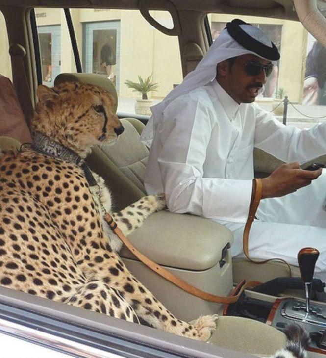 17 Εξωφρενικά πράγματα που είναι πιθανά μόνο στο Ντουμπάι
