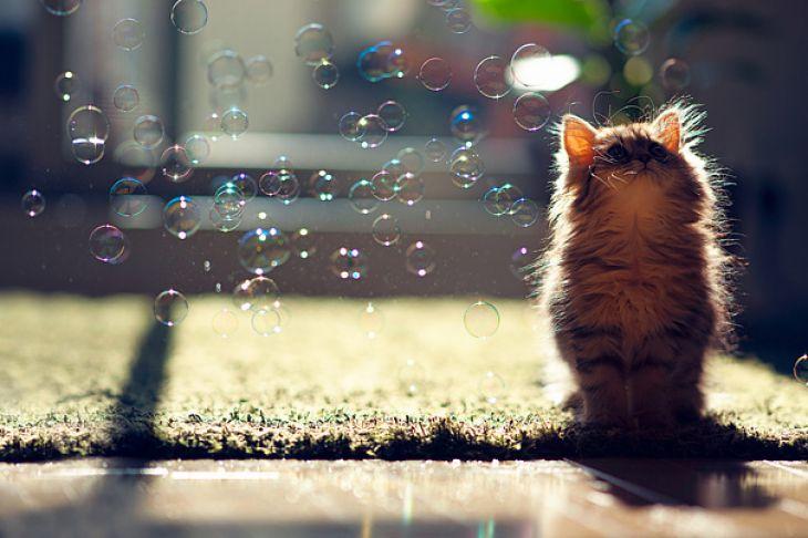 Gatito mirando burbujas de jabón