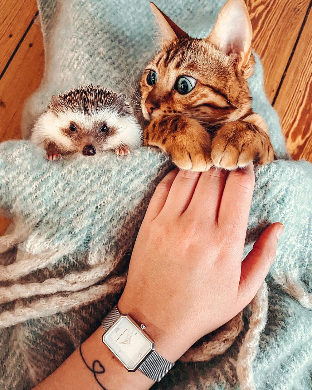Cozy friendship