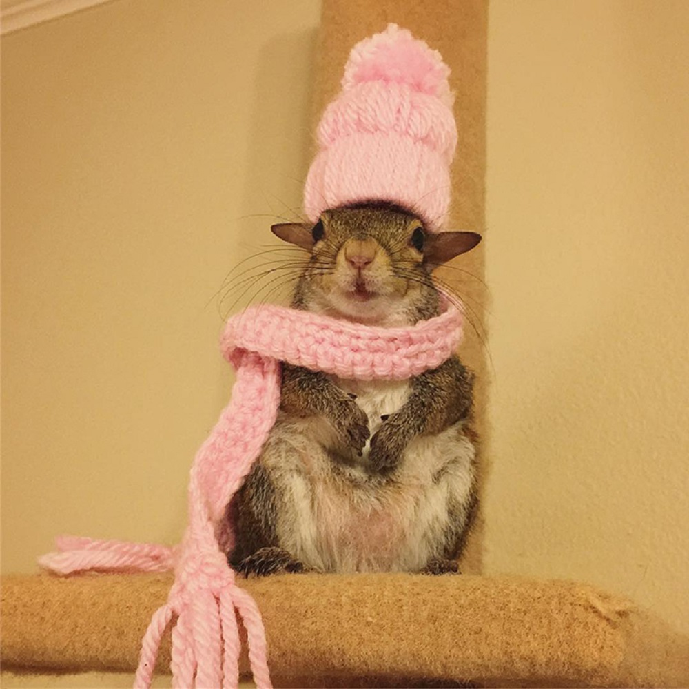 Squirrel in a hat and scarf