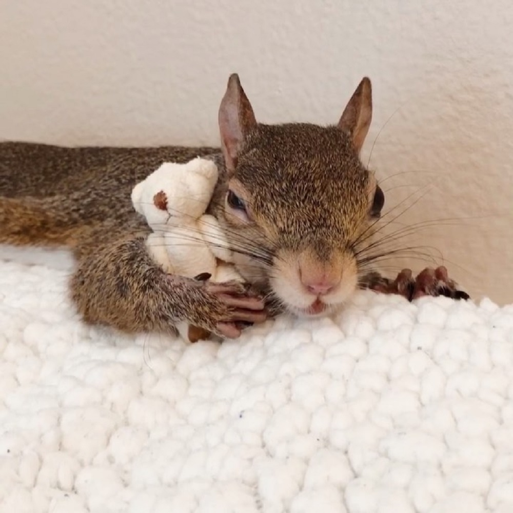 Squirrel with a soft toy