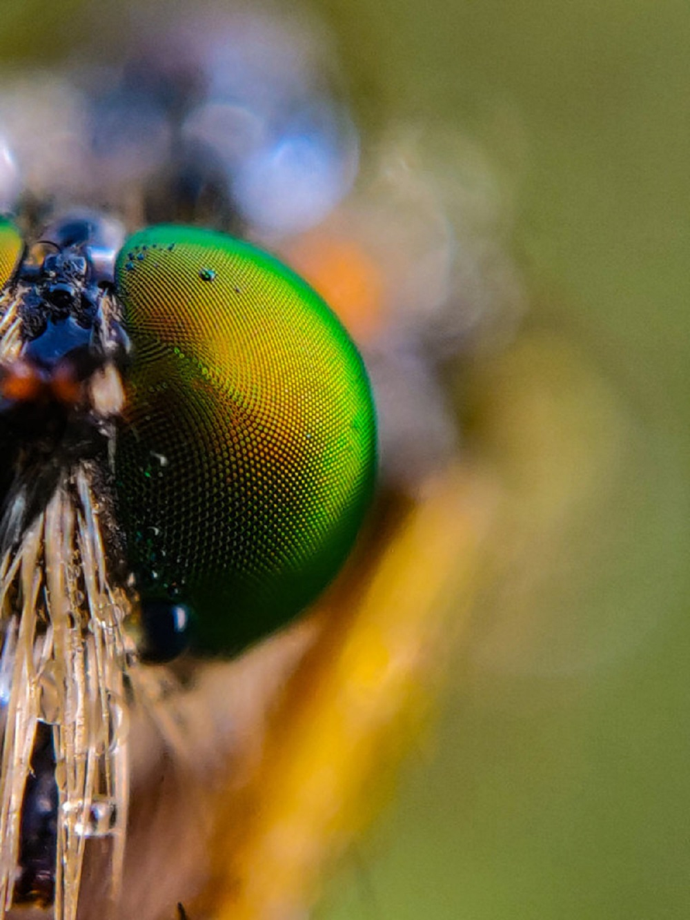 An up close snapshot of a robber fly
