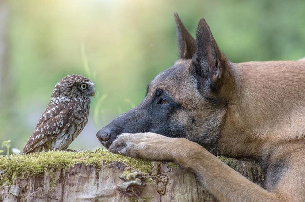 Rakan Anjing Dan Burung Hantu Rakan Haiwan Sejati