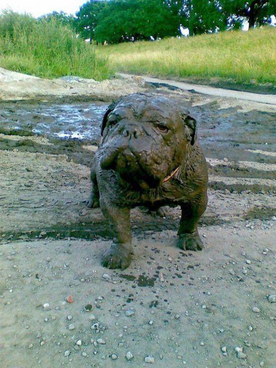 30 redenen waarom je nooit je hond in de modder moet laten spelen