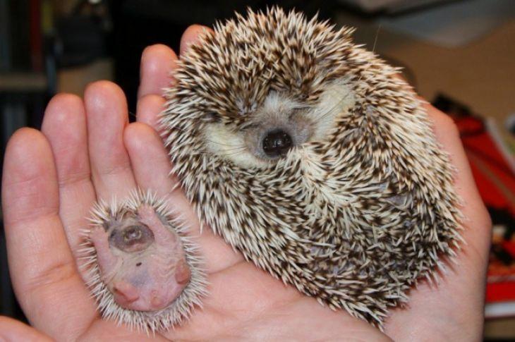 15 Crías de Animales que Derretirán el Corazón Más Helado