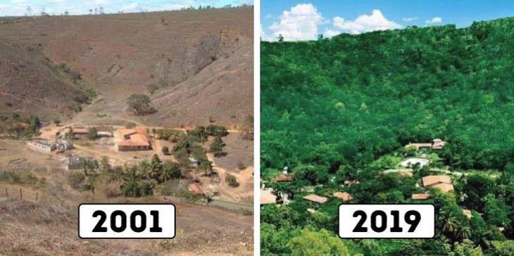 Um casal brasileiro passou 20 anos plantando uma floresta inteira, e milhares de animais selvagens voltaram para casa