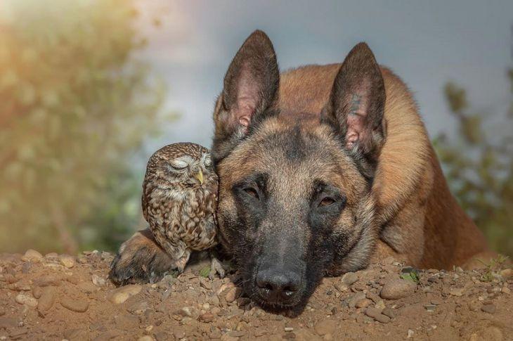 Uma Minúscula Coruja é Adotada por um Cão Gigante e a Ligação entre Ambos é Inegável