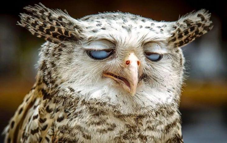 Fotos hilariantes de animais tiradas no momento perfeito