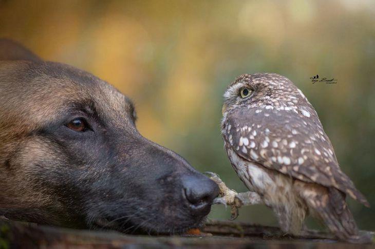 Μια μικροσκοπική κουκουβάγια γίνεται ο καλύτερος φίλος με έναν τεράστιο σκύλο και η σχέση που αναπτύσσουν μεταξύ τους είναι αξιολάτρευτη!
