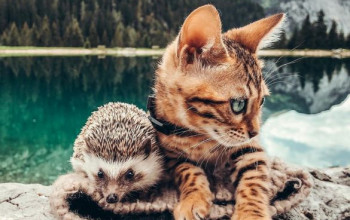 The Saga of a Hedgehog and its Bengal Buddy